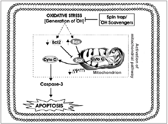 Schematic presentation of oxidative stress-induced mitochondrial