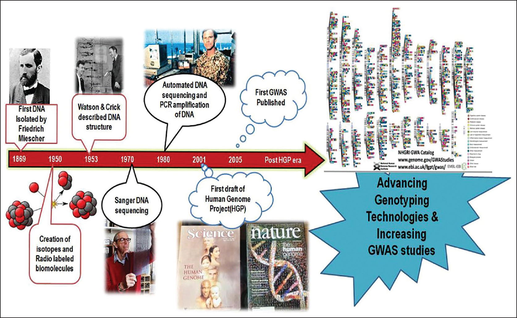 Figure 1: Schematic diagram of events contributing to the development of genomics